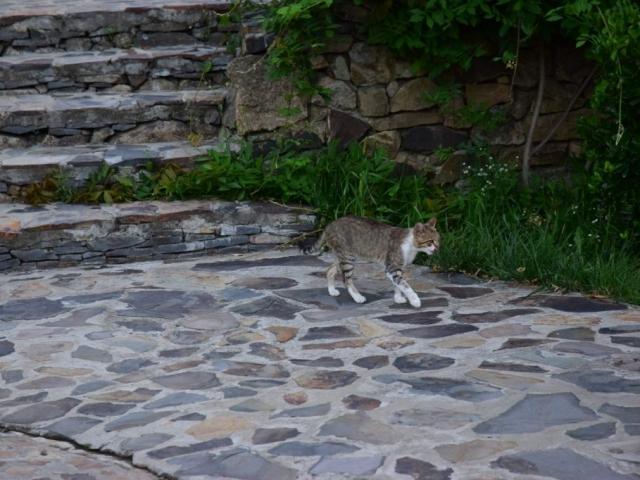 """РГК """"Чорна Гора"""" - Літо 2016"""